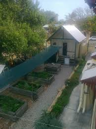 garden becomes lush equanimity foundation