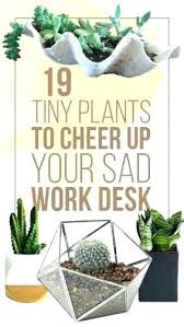 best plant for office best plants for office flowers for office desk good plants best
