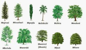 kinds of trees and their names my web value