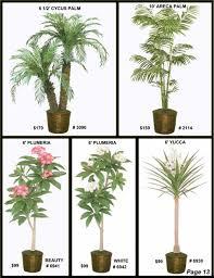 ficus tree areca palm outdoor palm willow tree