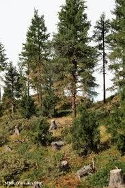364 best realistic trees árboles realistas images on