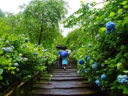rainy june feel the beauty of rain in japan matcha japan