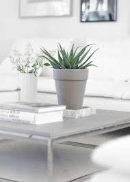 living room with white sofa and aloe vera houseplant easy to