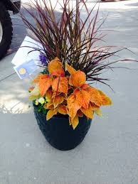 house warming gift ideas gift ideas potted plants for house warming u0026 others pleasanton