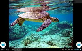 best sea animals android apps on google play