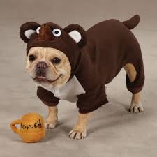 Halloween Costumes English Bulldogs Cutest Cat Dog Halloween Costumes Ebay