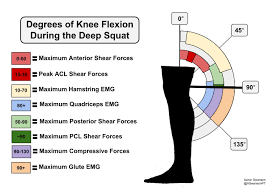 Diagram Of Knee Anatomy The Deep Squat Part 1 U2013 The Good The Bad U0026 The Not So Ugly