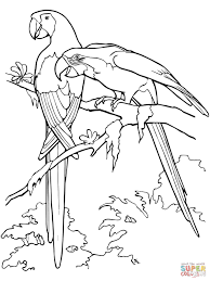 parrot coloring page detailed animal coloring pages parrot