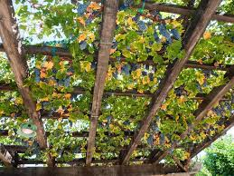 Trellis Wine 56 Best Napa Images On Pinterest Valley California Napa Valley