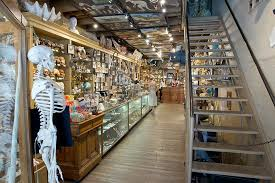 the evolution store new york city top tips before you go with