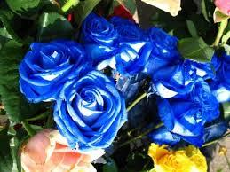 Very Pretty Flowers - blue roses very beautiful pictures 24 pics rose blu