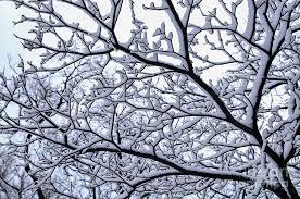 snowy tree photograph by elisseeva