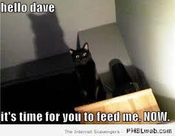 Feed Me Meme - 12 feed me now cat meme pmslweb