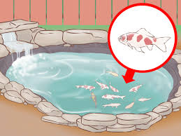 how to build a koi fish pond with pictures wikihow