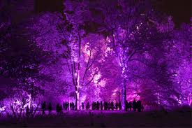 illumination tree lights at the morton arboretum returns on