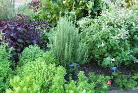 herbal garden herb gardens how to grow herbs indoors and out