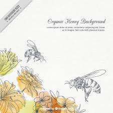 honey bee vectors photos and psd files free download
