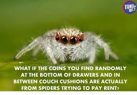 Spider Bro Meme - spider bros are just misunderstood album on imgur