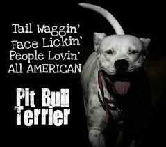 l american pitbull terrier a p b t 87 best a p b t images on pinterest pit bulls pitbull terrier