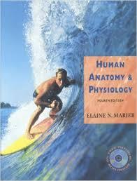 Human Anatomy And Physiology Marieb Hoehn Human Anatomy And Physiology Elaine Marieb Periodic Tables