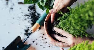 Interior Garden Services Gardening Services In Topeka Ks Landscape Design Services