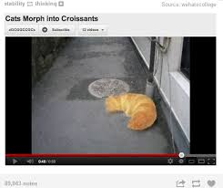 Croissant Meme - cat becomes a giant delicious croissant while being threatened