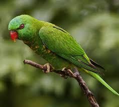 amazon black friday bird cages bird store delran nj todd marcus birds exotic inc