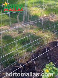 choosing the right vegetable trellis system for your orchard