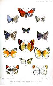 204 best papillons butterflies images on pinterest butterflies