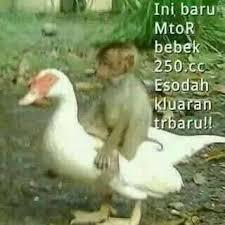 Meme Bebek - meme comic lucu id on twitter ini baru namanya motor bebek ckckck