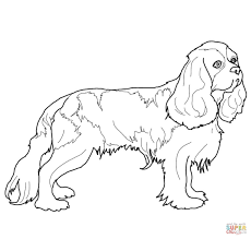cocker spaniel coloring page free printable coloring pages