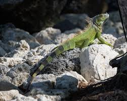 Iguana Island Little Palm Island Sunrise And Pool Matthew Paulson Photography
