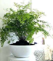 low light plants for office office plants low light indoor plants low light hanging download by