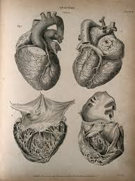 photo engraving file human heart four figures engraving by t milton 1814