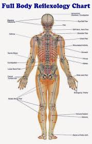 Foot Reflexology Map Reflexology Foot Massage Anatomy Poster 27x39 Reflexology
