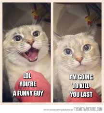 Evil Cat Meme - image funny cat laughing evil jpg adventure time wiki fandom