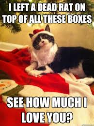 Funny Christmas Cat Memes - 16 christmas memes to get you through the holiday because sometimes