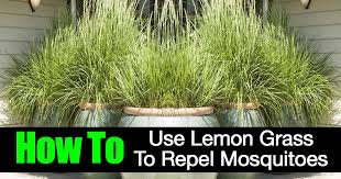 how to use lemon grass to repel mosquitoes