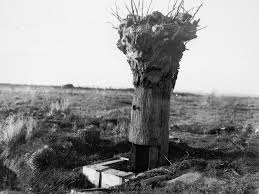 a tree used as an observation post during ww1 circa 1917
