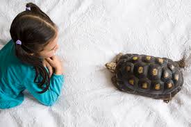 Tortoise Home Decor Learn About Overwintering Tortoises
