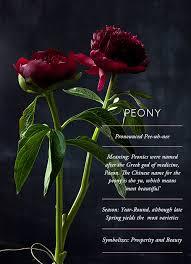 peony flower flower glossary peony design sponge