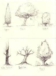 drawn shrub tree pencil and in color drawn shrub tree