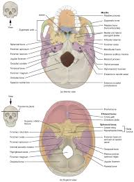 house structure parts names 7 2 the skull anatomy and physiology