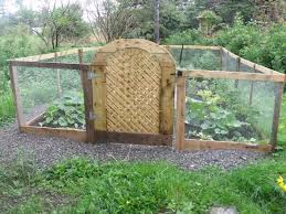 chicken manure vegetable garden gated vegetable garden in my garden pinterest vegetable