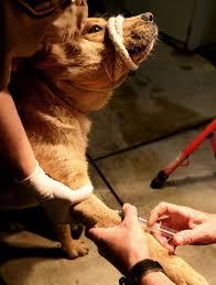 dog euthanasia animal euthanasia and capital some uncomfortable