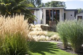 Tall Grass Landscaping by Landscaping Without Grass Pool Modern With Patio Contemporary Fire