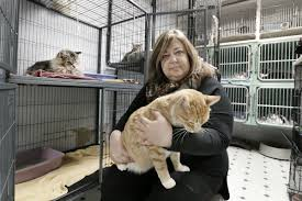 south jersey animal shelter in need of rescue