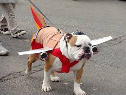 English Bulldog Halloween Costumes Howl Ween Dogs 55 Pics Dogs Costumes