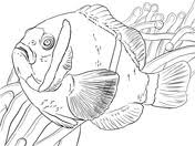 clown fish coloring page free printable coloring pages