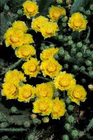 buy native grow native indiana kentucky native plant and wildlife plant of the week eastern